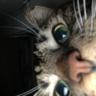 avatar_jakedacatman